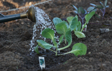 Vegetables You Can Plant Early